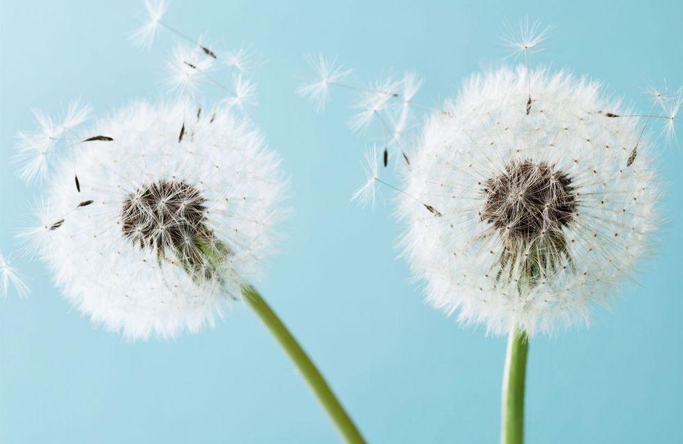 Hausmittel gegen Heuschnupfen: Die lindern die Beschwerden