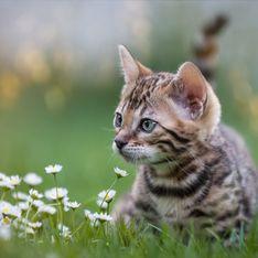 Un festival de chats va avoir lieu et on veut absolument y aller