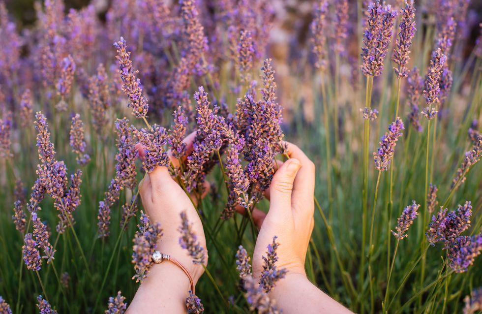 6 plantas para cuidarnos y mejorar el aspecto de nuestra piel