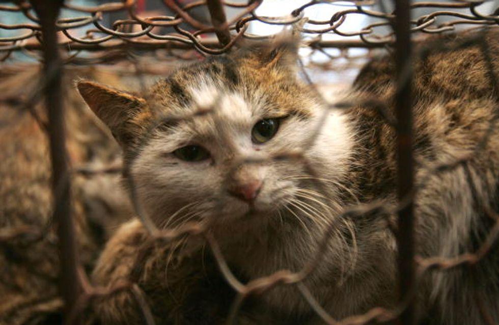 La présidente d'une association de protection des chats poursuivie pour cruauté envers les animaux