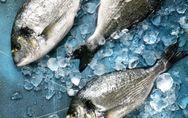 Tout savoir sur les poissons d'eau de mer