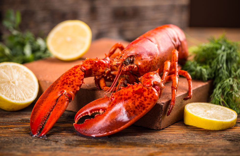Tout savoir sur les crustacés