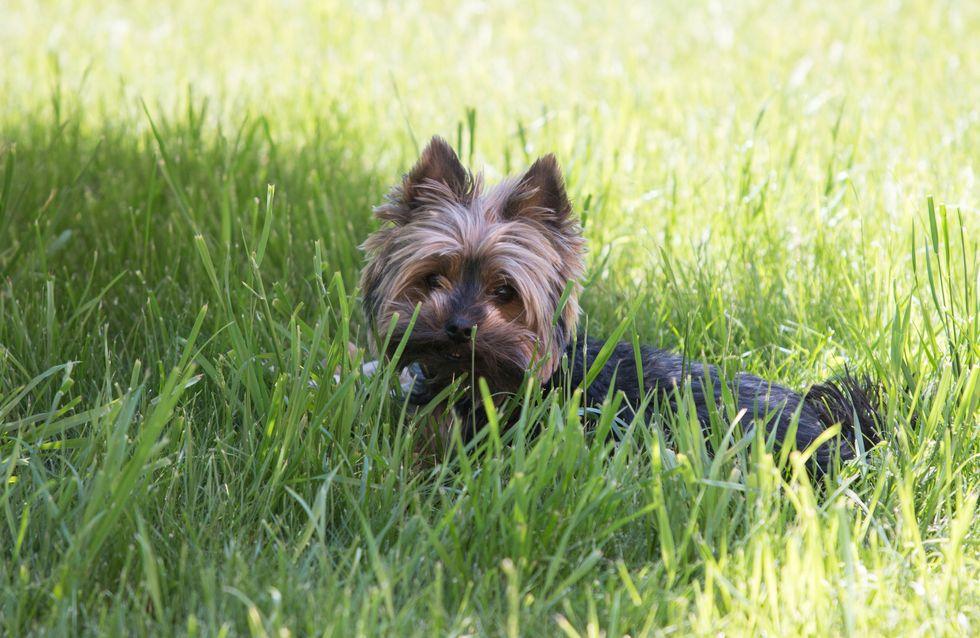 La Toile se mobilise pour ce chien battu et aspergé de gaz lacrymogène