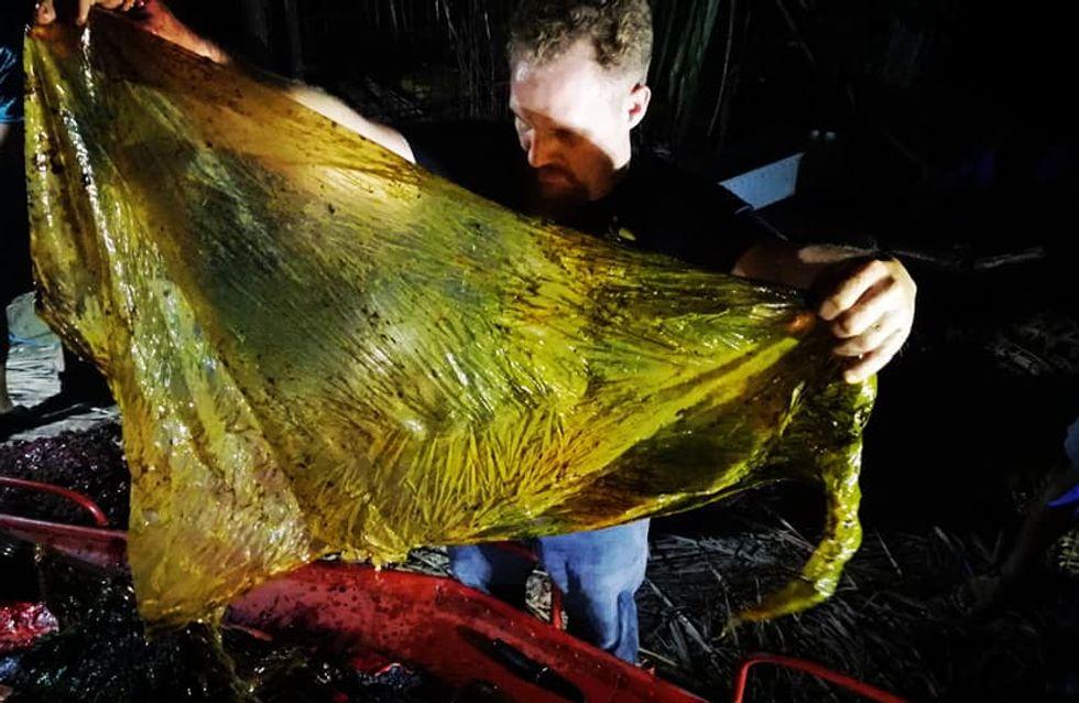 Une baleine décède des suites d'une longue agonie après avoir ingurgité 40 kg de plastique