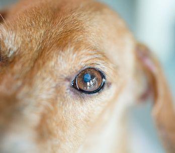 Un chien a été retrouvé mort dans la soute d'un avion