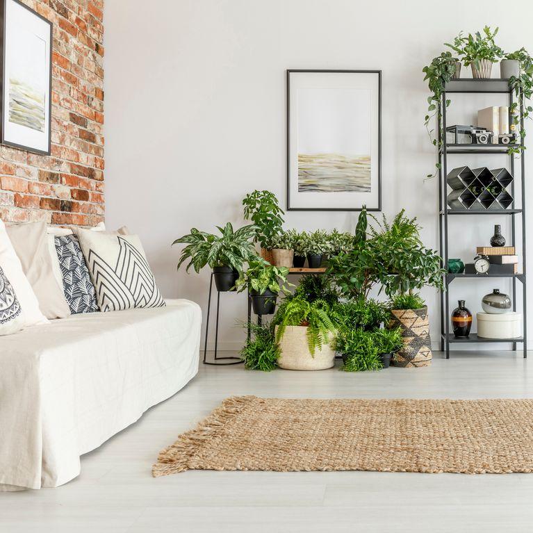 welche pflanze f r welches zimmer 7 geniale und n tzliche. Black Bedroom Furniture Sets. Home Design Ideas
