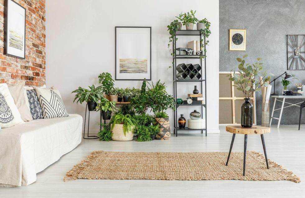 Genial eingerichtet: 7 ungewöhnliche (und nützliche) Pflanzen für jedes Zimmer