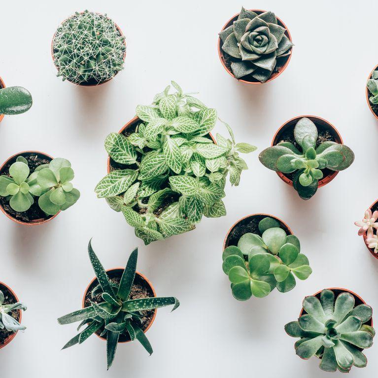 25 genial einfach DIY-Ideen mit Pflanzen