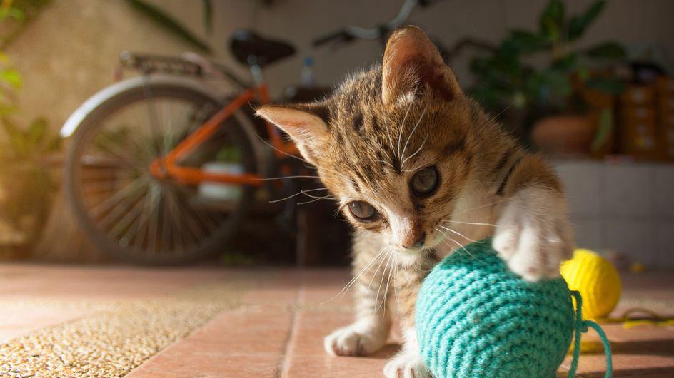 Un homme est devenu schizophrène à cause d'une bactérie transmise par son chat
