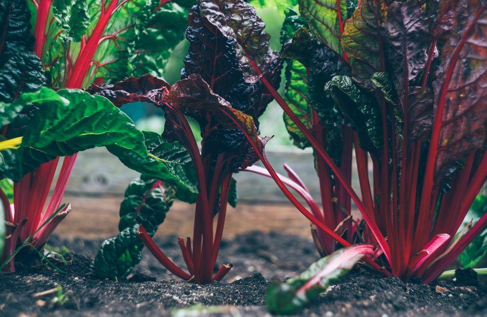 Les plantes et légumes insolites à faire pousser chez vous !