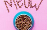 Hochwertiges Katzenfutter: So ernährt ihr eure Vierbeiner richtig