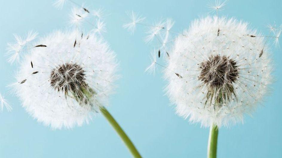 Remedios naturales para aliviar los síntomas de la alergia