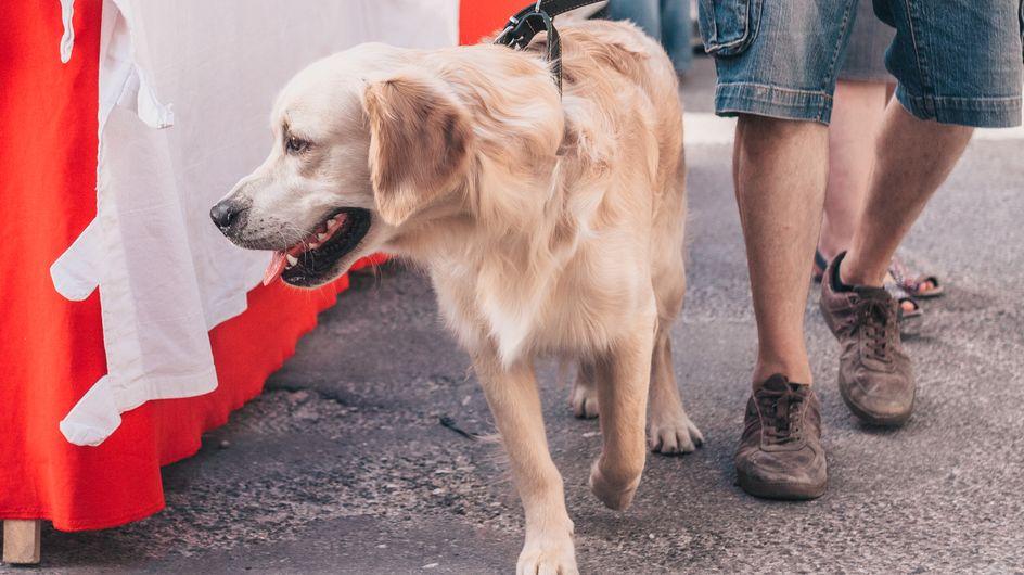 Mulhouse : un homme bientôt jugé pour avoir lapidé et noyé son chien