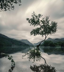 Keltisches Horoskop: Welcher Baum bist du?