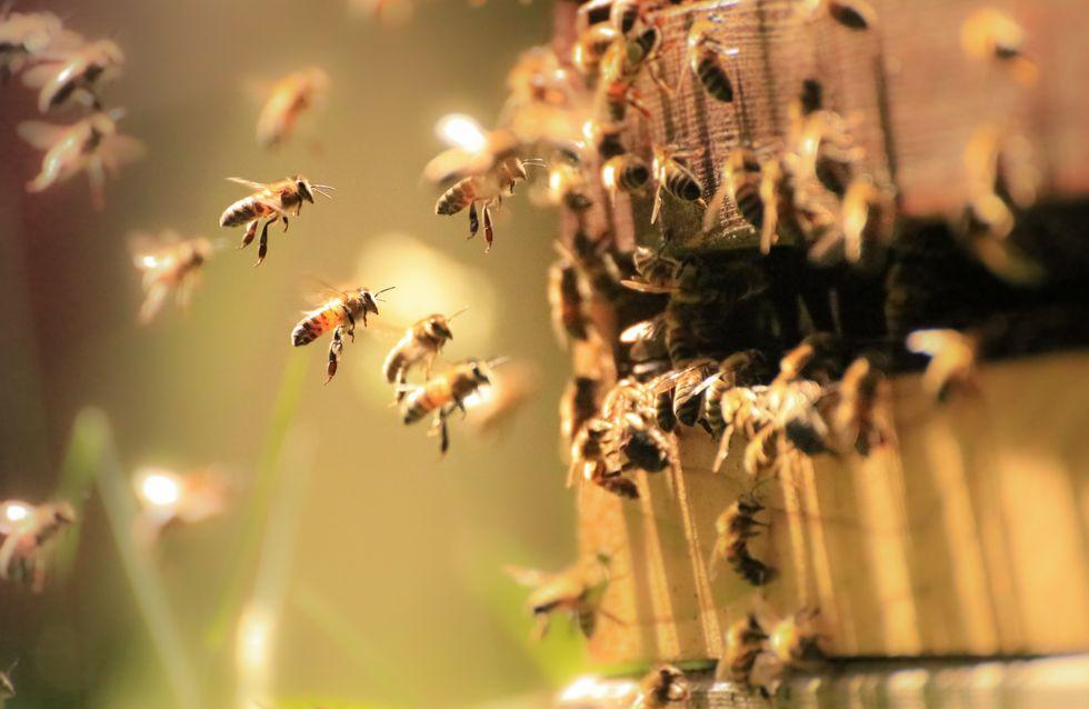 A Taïwan, quatre abeilles ont été découvertes dans l'oeil d'une femme