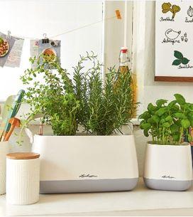 5 astuces pour cultiver vos plantes aromatiques