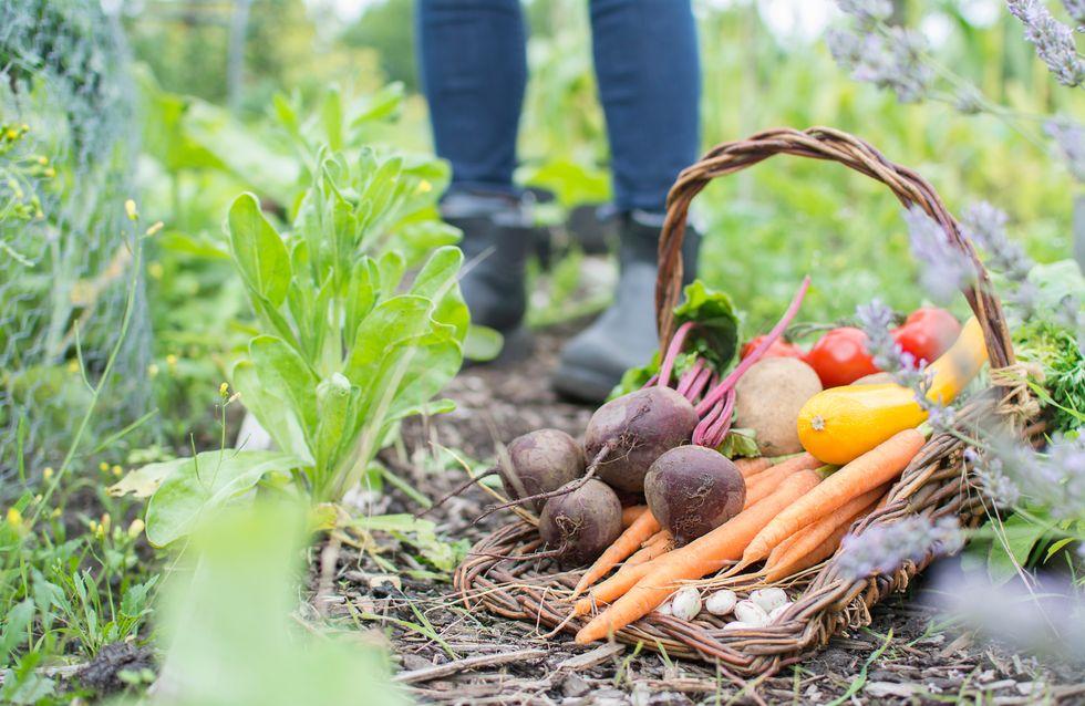 Quiz : êtes vous incollable sur la saison des fruits et légumes ?