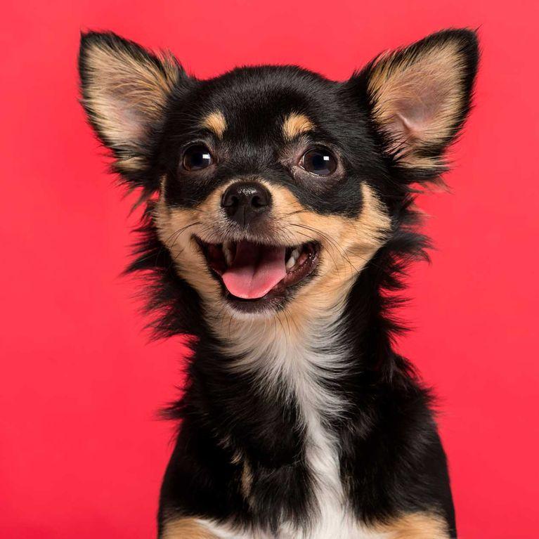 4 Hacks Die Jeder Hundebesitzer Kennen Muss