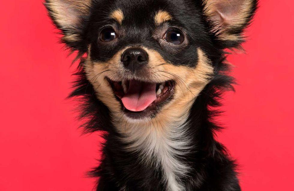4 Hacks, die jeder Hundebesitzer kennen muss