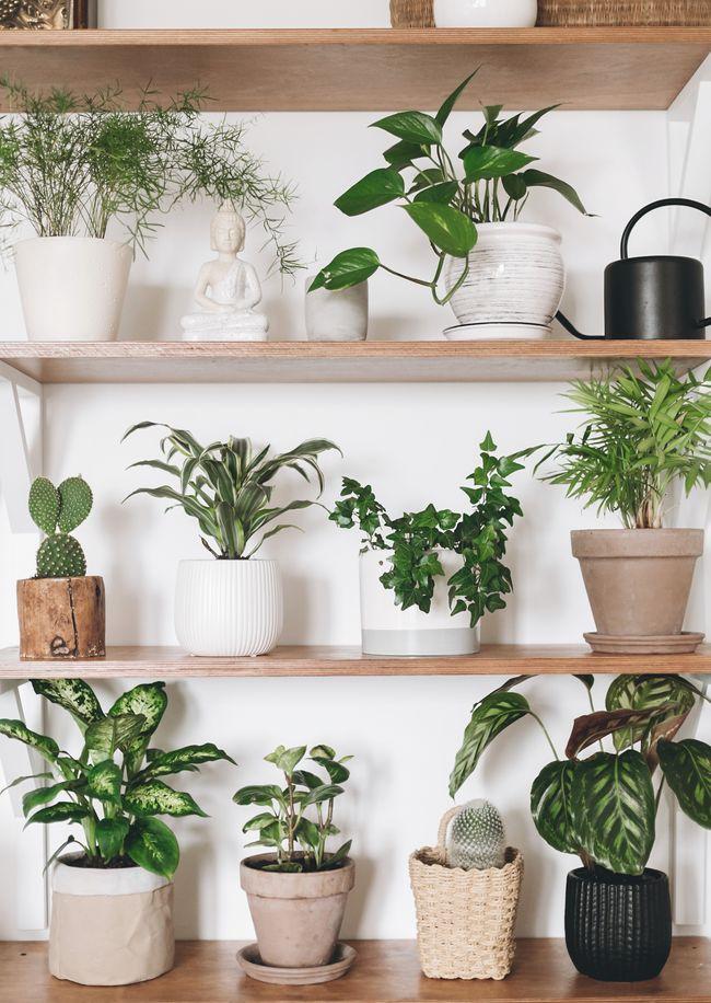 Comment Entretenir Ses Plantes D Interieur