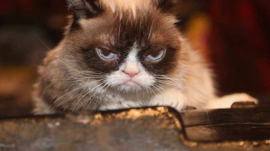 Death sucks: Grumpy Cat ist tot