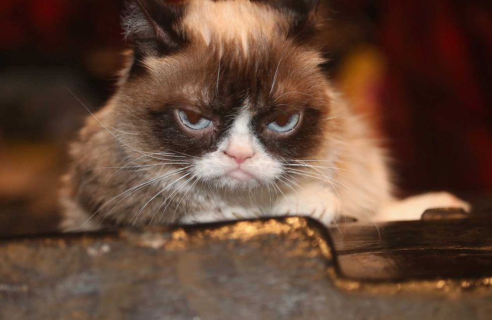 Death sucks: Grumpy Cat ist tot