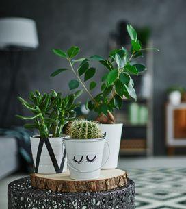 Las mejores plantas artificiales para decorar tu casa sin esfuerzo