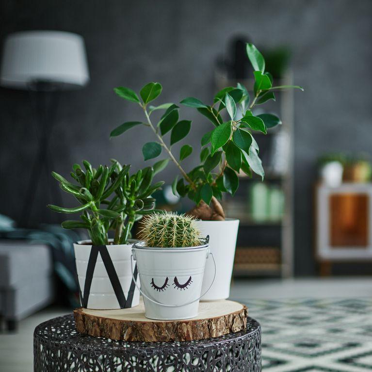 mejores plantas decorativas de interior Plantas Artificiales Bonitas Para Decorar Tu Casa