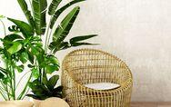Pflanzen fürs Wohnzimmer: Geniale Profi-Tipps und stylische Einrichtungsideen
