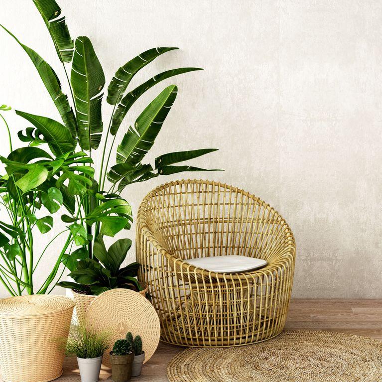 pflanzen f rs wohnzimmer die besten tipps f r euren. Black Bedroom Furniture Sets. Home Design Ideas