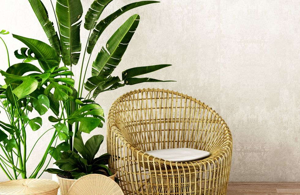 Pflanzen fürs Wohnzimmer: Die besten Tipps für euren Indoor ...