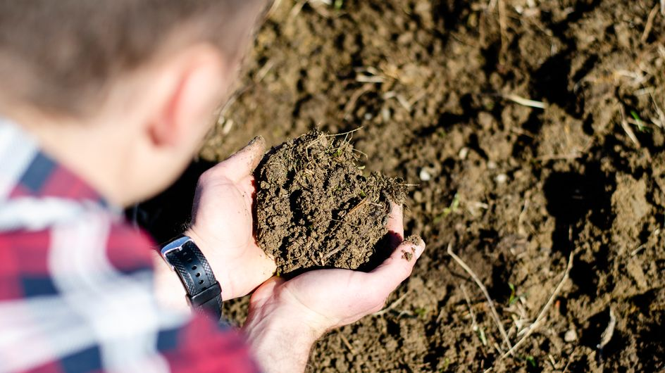 """Dans l'État de Washington, les morts peuvent être transformés en """"compost humain"""""""