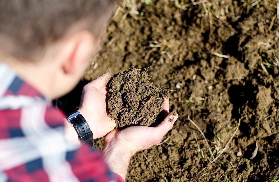 Dans l'État de Washington, les morts peuvent être transformés en compost humain