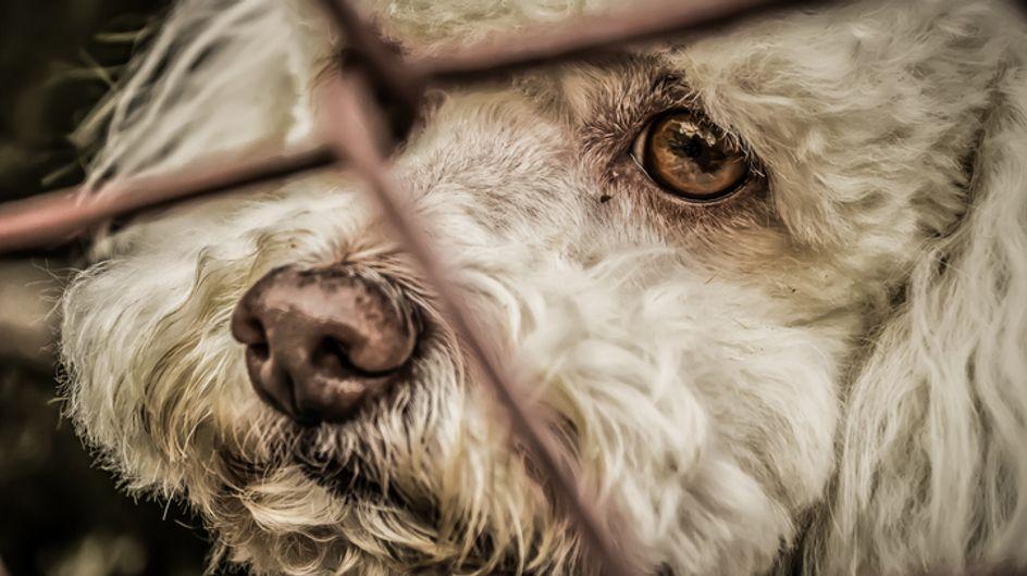 Inadmissible! Un chien euthanasié sur ordre de sa propriétaire pour être enterré avec elle