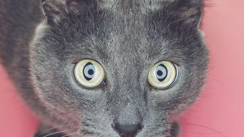 12 praktische Hacks, die jeder Katzenbesitzer kennen muss!