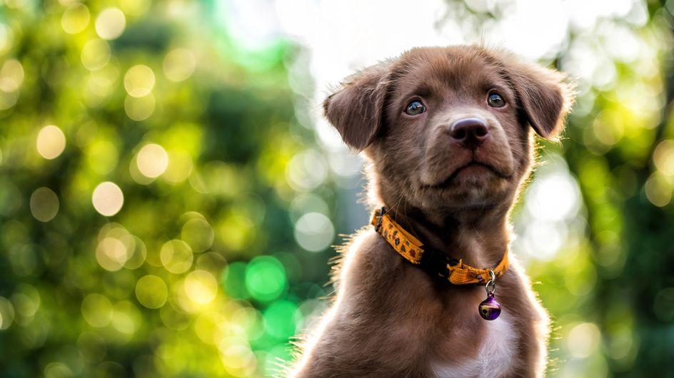 Aux Etats-Unis, un cinéma propose de venir avec son chien et une bouteille de vin