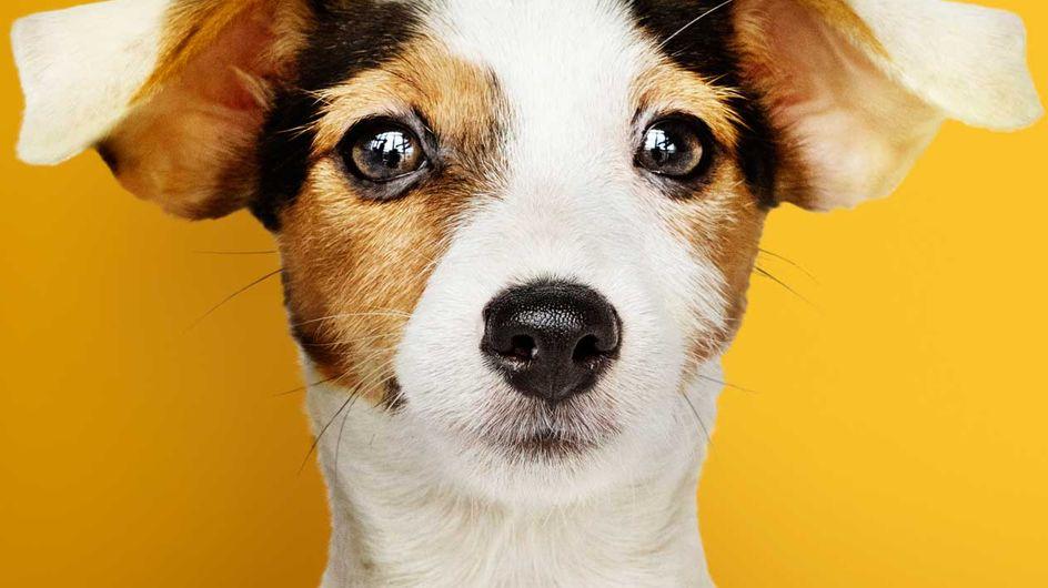 Profi-Tricks: DIESE Übungen fördern die Bindung zwischen Mensch & Hund