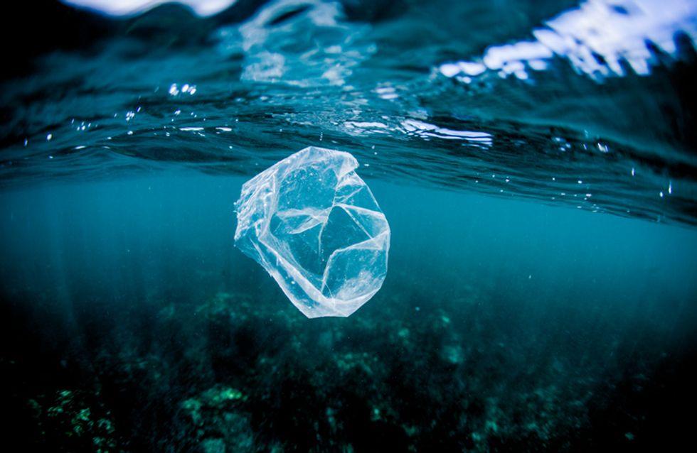 Journée mondiale de l'océan : Sea Shepherd part en guerre contre les mégots de cigarettes !