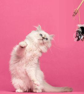 Katzen beschäftigen: 7 geniale Tricks für glückliche Vierbeiner