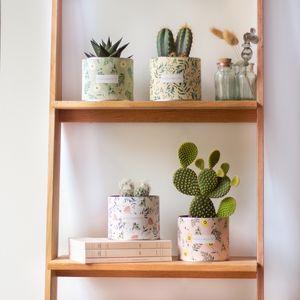 Une idée de composition de cactus