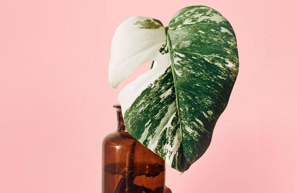 Zimmerpflanzen pflegen: DAS sind die 6 häufigsten Fehler