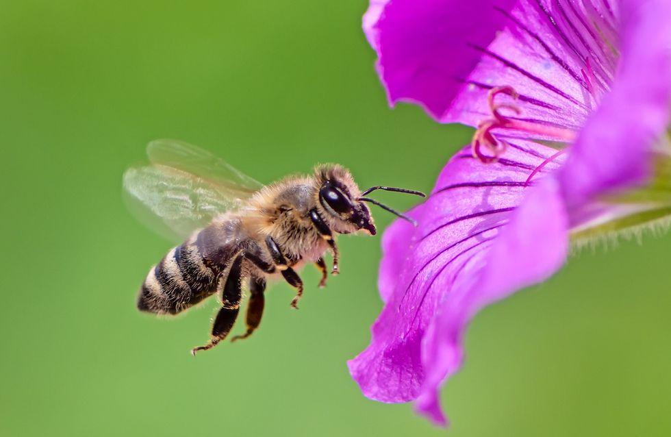 Sognare un'ape: qual è il significato psicologico?