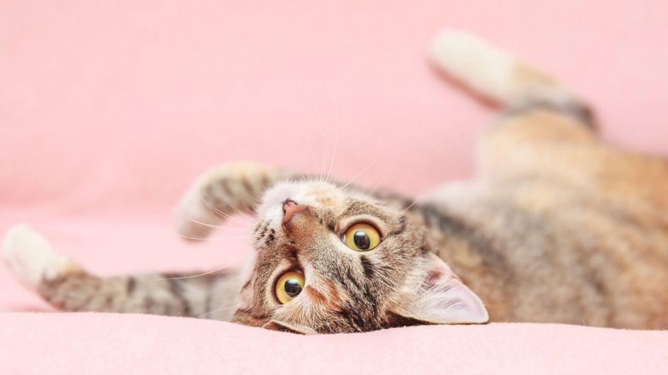 Katze bei Hitze abkühlen: Die besten Tricks für den Sommer