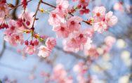 Il significato dei fiori: come sceglierli in base alla loro simbologia!