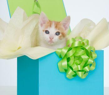 Soldes pour chats et chiens : sélection de bons plans pour vos animaux de compag