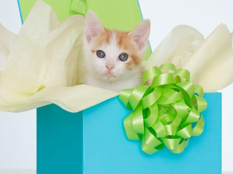 Soldes pour chats et chiens : sélection de bons plans pour vos animaux