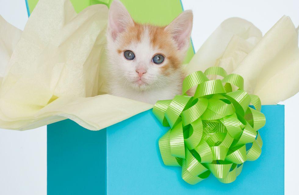 Soldes pour chats et chiens : sélection de bons plans pour vos animaux de compagnie