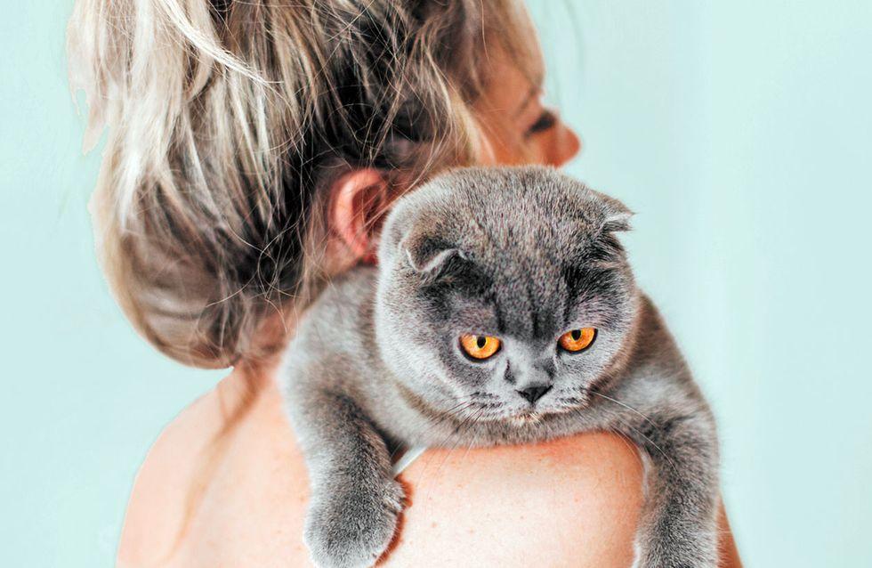 Katzenhaltung: Wenn ihr DIESE 6 Fehler vermeidet, bleibt eure Katze lange gesund