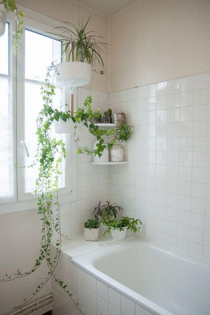 Lierre suspendu dans une salle de bain