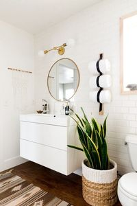 Sanseveria dans la salle de bain